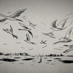Ep6-dessin_oiseau